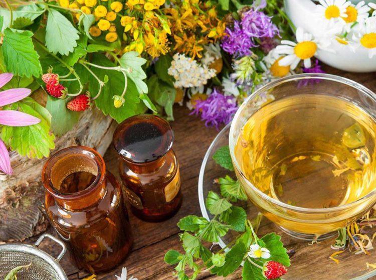 17 трав и растений для вкусного и полезного чая